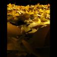 ayacolor 2003 autumn