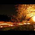 ayacolor 2004 sakura